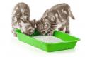 Screenshot 2021 03 10 KittenLitterBox 170685878 original jp