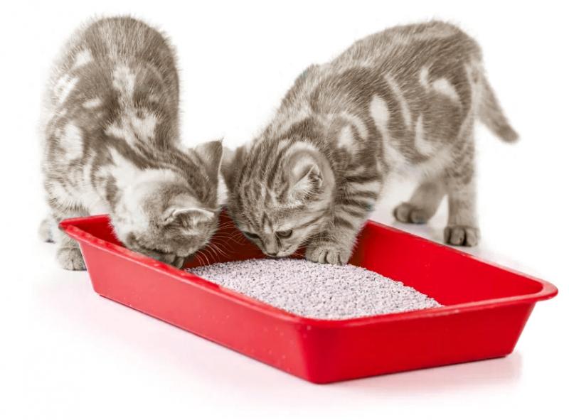 Screenshot 2021 03 10 KittenLitterBox 170685878 original jpg ob