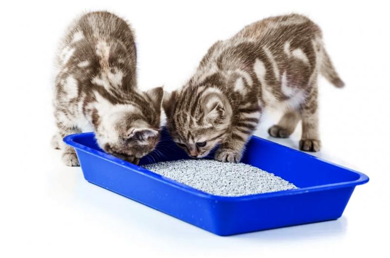 Screenshot 2021 03 10 KittenLitterBox 170685878 original jpg obraz WEBP 940×627 pikseli
